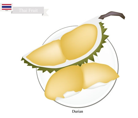king thailand: Thai Fruit, Illustration of Durian. One of The Most Popular Fruits and A King of Fruit in Thailand. Illustration
