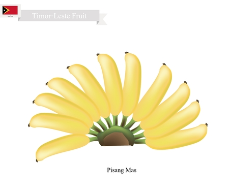 mas: Timor-Leste Fruit, Illustration of Pisang Mas or Golden Banana. One of The Most Popular Fruits in Timor-Leste. Illustration