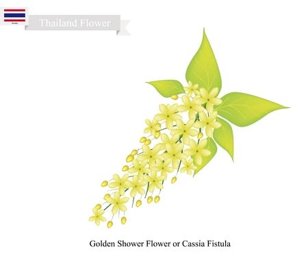 thai flag: Thailand Flower, Illustration of Golden Shower Flowers or Cassia Fistula Flowers. The National Flower of Thailand.