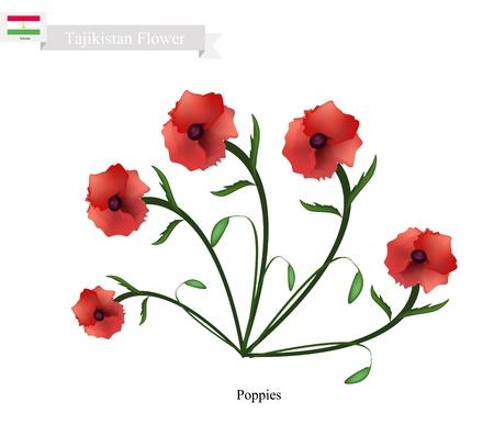 opium: Tajikistan Flower, Illustration of Red Poppy Flowers. One of The Most Popular Flower in Tajikistan.