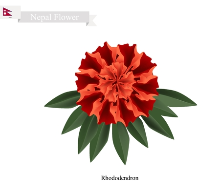 Nepal Flower, Illustration of Red Rhododendron Flowers. The National Flower of Nepal.