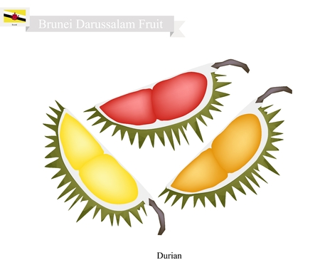 asean: Brunei Darussalam Fruit, Illustration of Durian. One of The Most Popular Fruits in Brunei Darussalam.