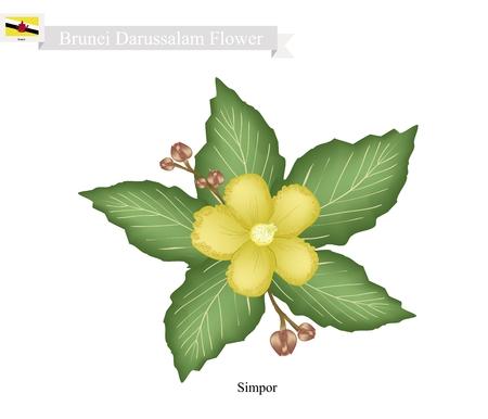 brunei darussalam: Brunei Flower, Illustration of Simpor Flowers or Dillenia Flowers. The National Flower of Brunei Darussalam.