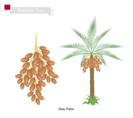 date palm: Bahrain Tree, Illustration of Date Palm. The National Tree of Bahrain.