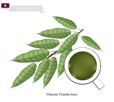 lao: Lao Cuisine, Traditional Tiliacora Triandra Leaves Juice. One of The Most Popular Drink in Lao. Illustration