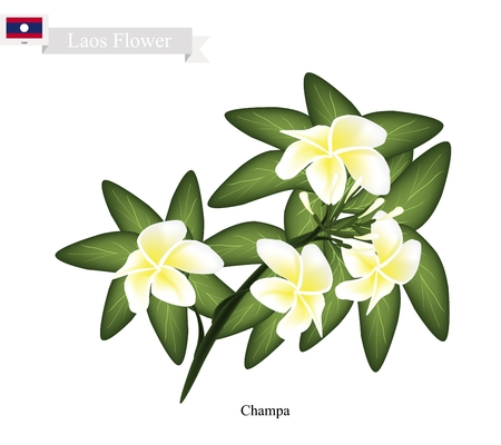 lao: Lao Flower, Illustration of Champa Flowers or Plumeria Frangipanis Flowers. The National Flower of Lao. Illustration