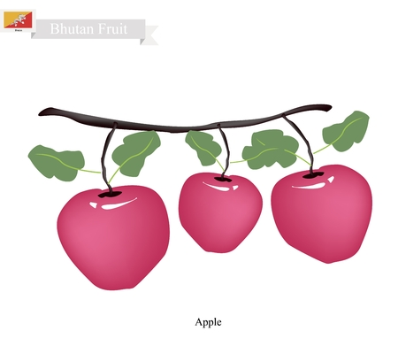 apple orchard: Bhutan Fruit, Illustration of Apple. One of The Most Popular Fruits of Bhutan. Illustration