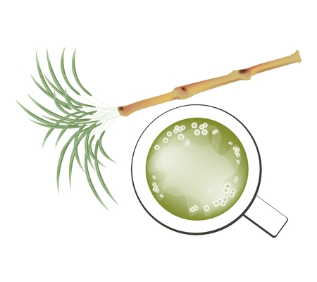 sugarcane: Beverage and Drink, Illustration of Fresh Sugarcane and A Glass of Sugar Cane Juice Isolated on White Background.