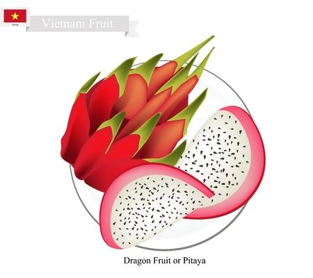 Vietnam Fruit, Illustration of Dragon Fruit or Pitaya Fruit. One of The Most Popular Fruits in Vietnam.