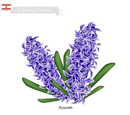 레바논 꽃, 히아신스 꽃의 그림입니다. 레바논에서 가장 인기있는 꽃 중 하나입니다. 스톡 콘텐츠 - 57029890