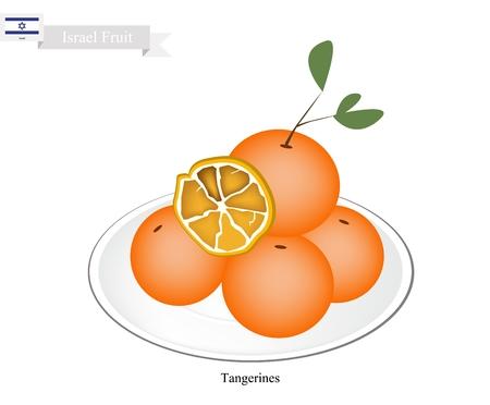 mandarin orange: Israel Fruit, Illustration of Tangerines or Mandarin Orange. One of The Most Popular Fruits in Israel. Illustration