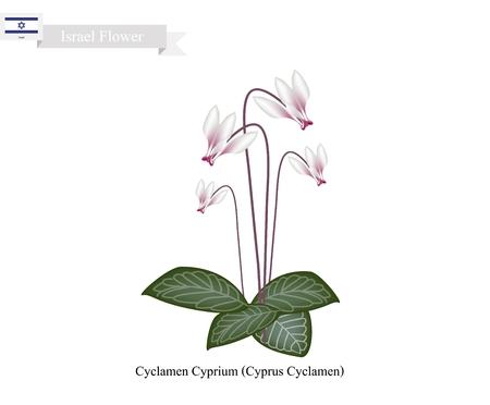 cyclamen: Israel Flower, Illustration of Cyclamen Cyprium Flowers or Cyprus Cyclamen Flowers. The National Flower in Israel.