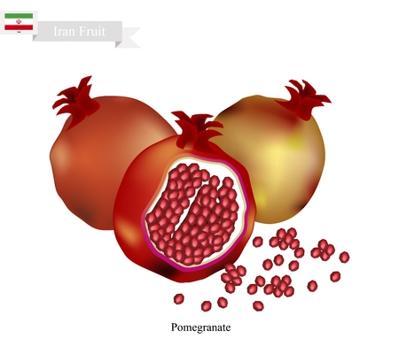 national fruit of china: Iran Fruit, Ripe and Sweet Pomegranate. One of The Most Popular Fruits of Iran. Illustration