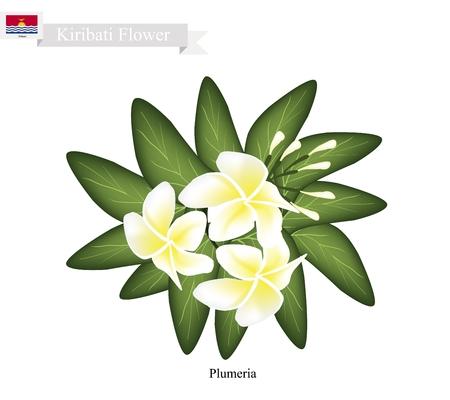 most popular: Kiribati Flower, Illustration of Plumeria Frangipanis Flowers. One of The Most Popular Flower in Kiribati.