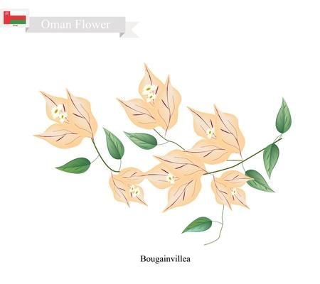bougainvillea: Illustration of Orange Bougainvillea Flowers or Paper Flowers. One of The Most Popular Flower in Oman. Illustration
