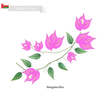 bougainvillea: Illustration of Pink Bougainvillea Flowers or Paper Flowers. One of The Most Popular Flower in Oman. Illustration