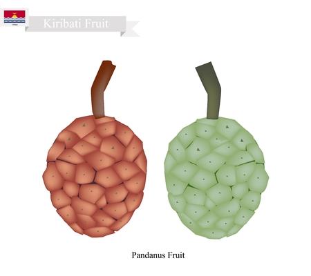 thai herb: Kiribati Fruit, Screw Pine, Pandanus Tectorius or Pandanus Odoratissimus. One of The Native Fruits in Kiribati.