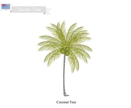 Tuvalu Tree, Illustration of Coconut Tree. The Common Tree of Tuvalu