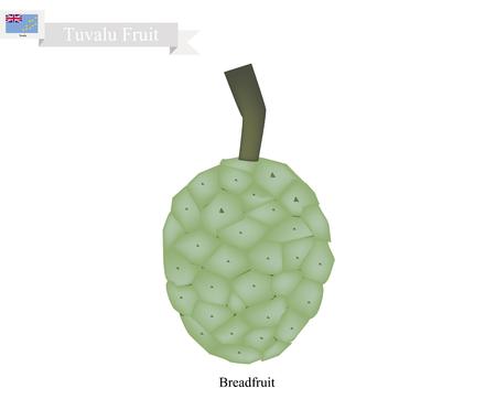 Tuvalu  Fruit, Screw Pine, Pandanus Tectorius or Pandanus Odoratissimus. The Native Fruit in Tuvalu. Illustration