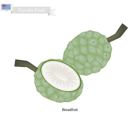 Tuvalu  Fruit, Unripe Screw Pine, Pandanus Tectorius or Pandanus Odoratissimus. The Native Fruit in Tuvalu. Illustration
