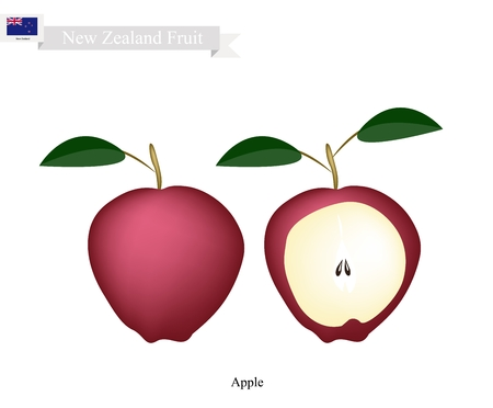 apple orchard: New Zealand Fruit, Illustration of Apple. One of The Most Popular Fruits of New Zealand.
