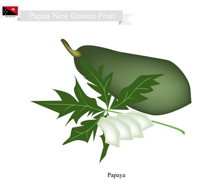 new guinea: Papua New Guinea Fruit, Illustration of Papaya. One of The Native Fruits of Papua New Guinea. Vettoriali