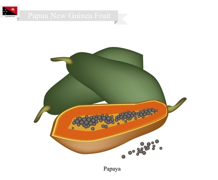 Papua New Guinea Fruit, Illustration of Ripe Papaya. One of The Most Popular Fruits in Papua New Guinea. Illustration