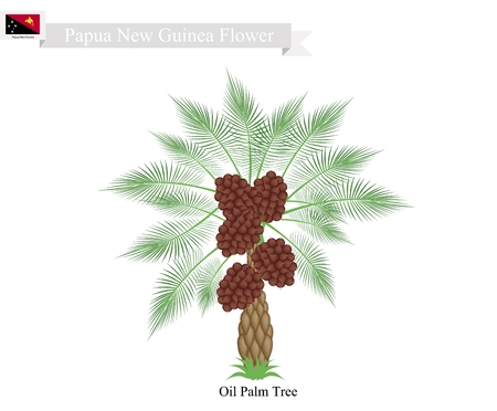 파푸아 뉴 기니 나무, 코코넛 나무의 그림입니다. 파푸아 뉴기니의 원시 나무.