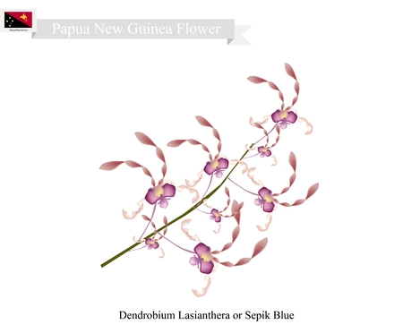 new guinea: Papua New Guinea Flower, Illustration of Dendrobium Lasianthera or Sepik Blue. The National Flower of Papua New Guinea.
