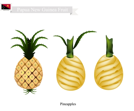 papua new guinea: Papua New Guinea Fruit, Illustration of Pineapple. One of The Most Popular Fruits in Papua New Guinea.
