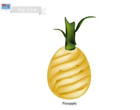 Fiji Fruit, Illustration of Pineapple. One of The Most Popular Fruits in Fiji.