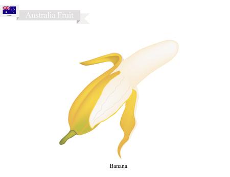 most popular: Australia Fruit, Illustration of Golden Banana. One of The Most Popular Fruits in Australia.