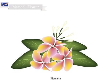 tonga: Marshall Flower, Illustration of Plumeria Frangipanis Flowers. The National Flower of Marshall Islands.