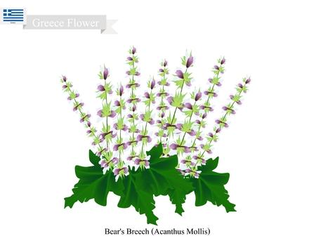 Greece Flower, Illustration of Bears Breech or Acanthus Mollis Flowers. The National Flower of Greece.