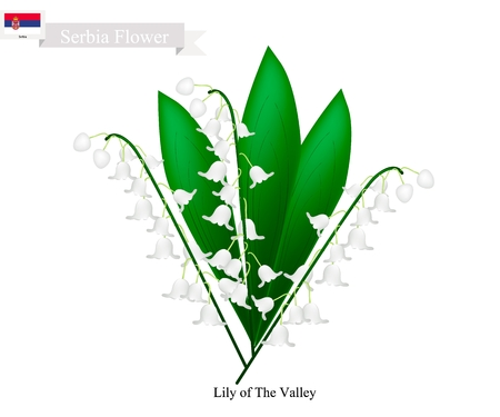 Serbia Flower, Illustration of  Lily of The Valley Flowers. The National Flower in Serbia.