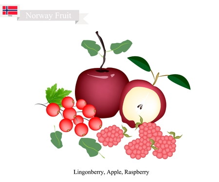 Norwegian Fruit, Illustration of Fresh Ripe Lingonberry, Apple and Raspberry. The Famous Fruits of Norway.