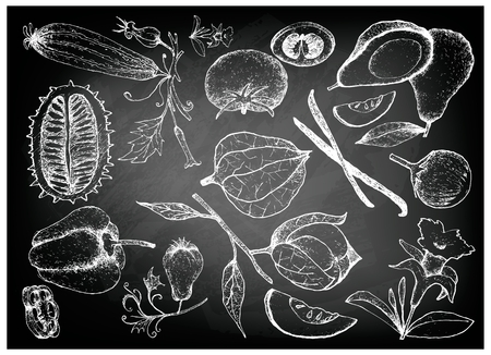 Vegetable and Herb, Illustration of Hand Drawn Sketch Delicious Fresh Gourd and Squash on Black Chalkboard. Illustration