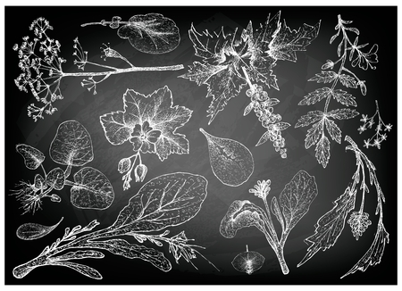 Vegetable Salad, Illustration of Hand Drawn Sketch Delicious Fresh Green Leafy and Salad Vegetable on Black Chalkboard.