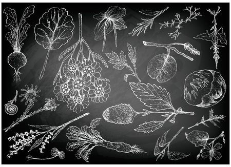 Vegetable Salad, Illustration of Hand Drawn Sketch Delicious Fresh Green Leafy and Salad Vegetable on Black Chalkboard.