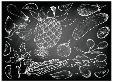 Vegetable and Herb, Illustration of Hand Drawn Sketch Delicious Fresh Gourd and Squash Isolated on Black Chalkboard.