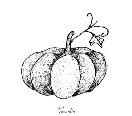 Vegetable, Illustration of Hand Drawn Sketch Delicious Fresh Pumpkin Is One of Vitamin Nutrients to Improve Nutrient Intake and Health Benefits.  Illustration