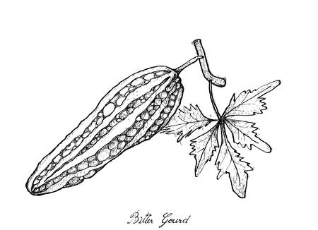 Vegetales y hierbas, Ilustración de bosquejo dibujado a mano Delicioso bálsamo de pera fresca, manzana balsámica, calabaza amarga y melón amargo aislado sobre fondo blanco