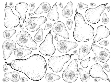 Vegetable, Illustration Background Pattern of Hand Drawn Sketch Fresh Butternut Pumpkin or Butternut Squash, Pumpkin Is One of Vitamin Nutrients to Improve Nutrient Intake and Health Benefits.