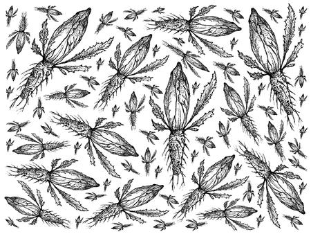 Groente, Illustratie Achtergrondpatroon van Hand Getrokken Schets Heerlijk Vers Groen Witlof of Sonchus die op Witte Achtergrond wordt geïsoleerd.
