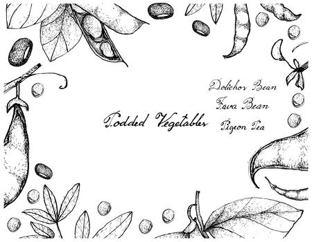 Vegetable, Illustration Frame of Hand Drawn Sketch Fresh Podded Vegetables Isolated on White Background. 向量圖像
