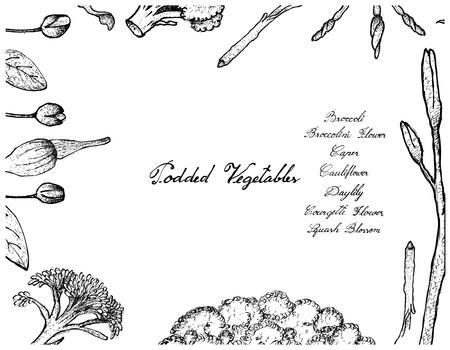 Vegetable, Illustration Frame of Hand Drawn Sketch Fresh Podded Vegetables Isolated on White Background. Imagens - 89981825