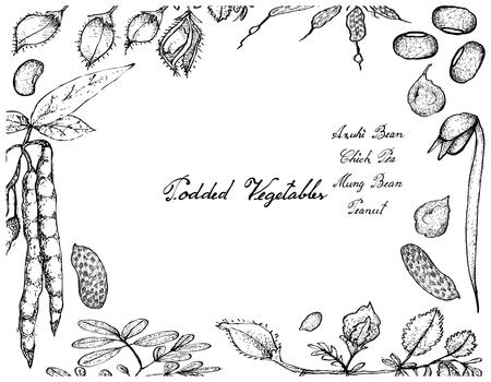 long bean: Vegetable, Illustration Frame of Hand Drawn Sketch Fresh Podded Vegetables Isolated on White Background. Illustration