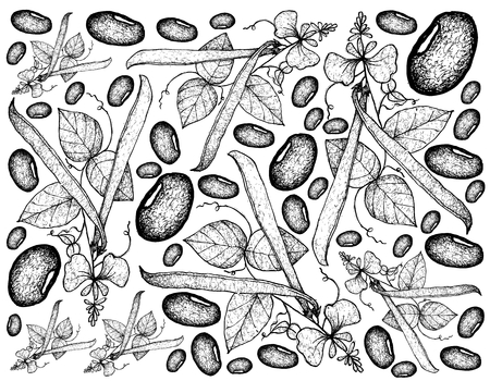 Vegetable, Illustration Background Pattern of Hand Drawn Sketch Fresh Runner Beans, Used in Both Sweet and Savory Recipes. Illustration
