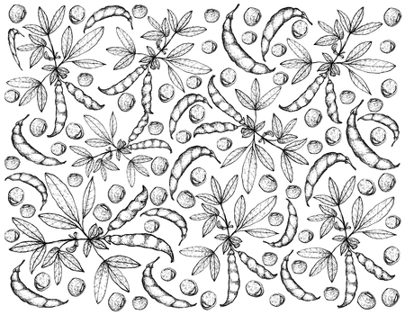 Vegetable, Illustration Background Pattern of Hand Drawn Sketch Fresh Pigeon Pea and Cajanus Cajan Plant with Pods.  Illustration