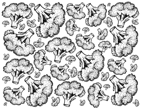 Vegetable, Illustration Background Pattern of Hand Drawn Sketch Illustration of Delicious Fresh Green Broccoli.